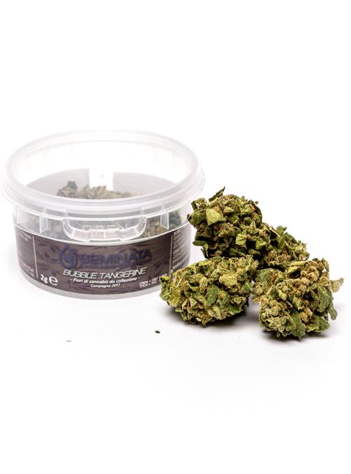 Bubble Tangerine | SemiNata Cannabis Company